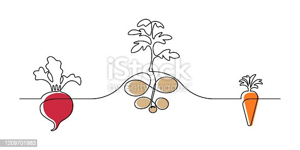 Vegetable plants design in continuous line art drawing style. Growing of root vegetables on garden plot. Vector illustration