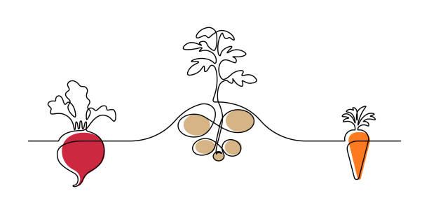 root vegetable plants - root vegetable stock illustrations