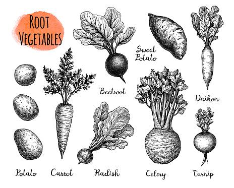 Root Vegetables big set.