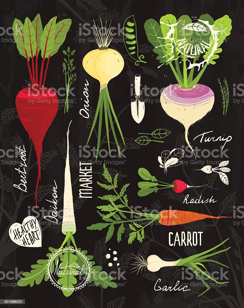 Root Vegetables with Leafy Tops Set for Design on Blackboard vector art illustration