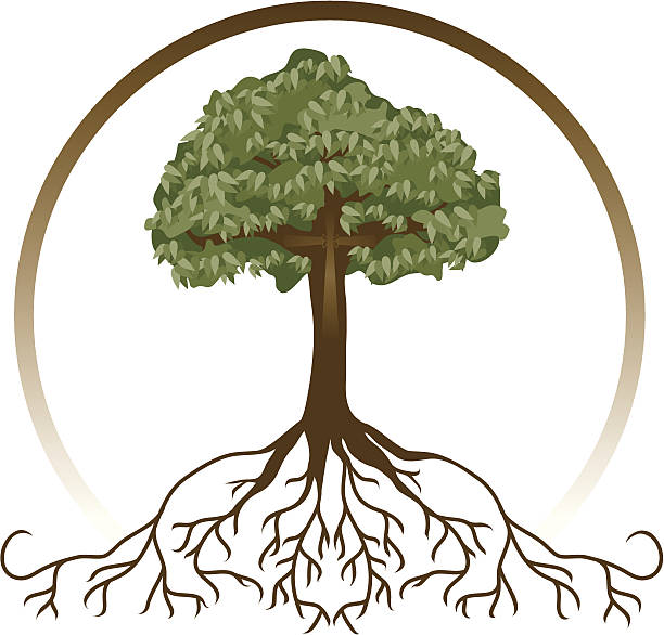 Rooted in Christ (with JPG) A tree with wide-spread roots and a cross, symbolizing deeply-rooted faith. root hair stock illustrations