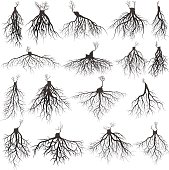 roots silhouette