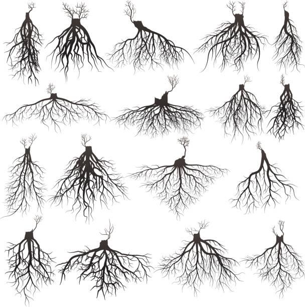 illustrazioni stock, clip art, cartoni animati e icone di tendenza di roots silhouette - radice