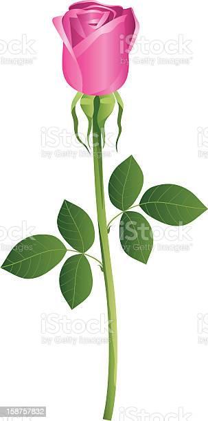 Rosa vector id158757832?b=1&k=6&m=158757832&s=612x612&h=uiiwimygswfgstmume0db4iachzegvebba ljyot8do=