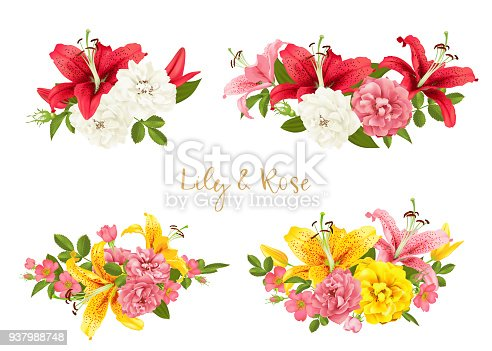 rose and lily set. vector card illustration.