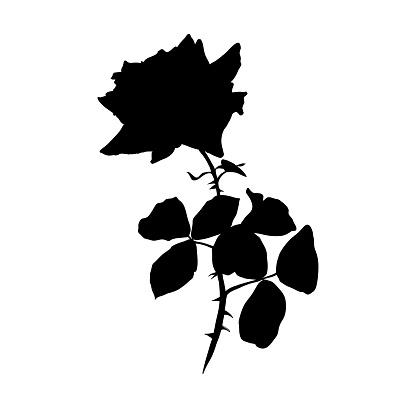 Rose Black Silhouette illustration. Barbed flower with leaves. Rose pencil drawing. Garden flower sketch