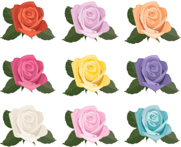 Rose Blooms Icons vector art illustration