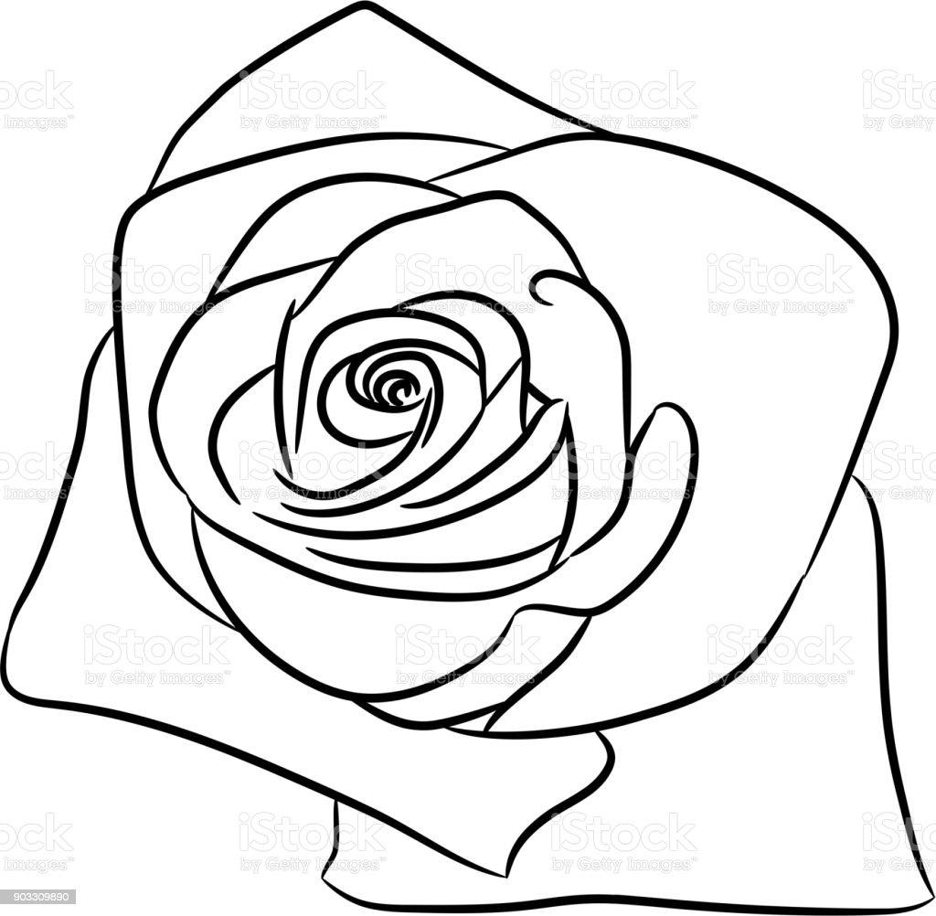 Ilustración de Flor De Capullo De Rosa Desde El Contorno Negro Sobre ...