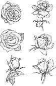Rose buds icons. Flower sketch emblems
