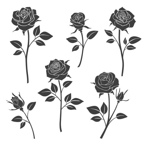 Rose Buds Vector Silhouettes Flowers Design Elements Art Illustration Nine Black And White