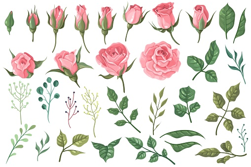 Rose elements. Pink flower buds, roses with green leaves bouquets, floral romantic wedding decor for vintage greeting card. Vector set