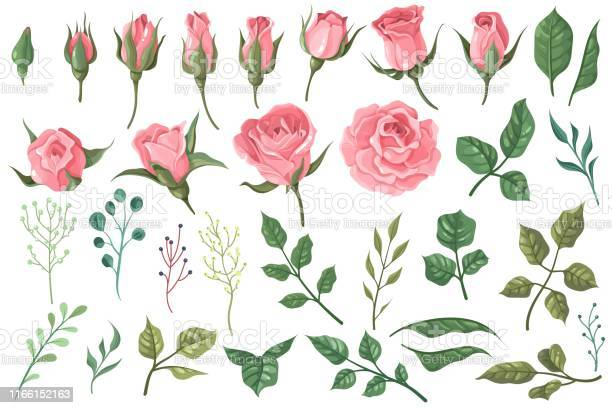 Rose elements pink flower buds roses with green leaves bouquets vector id1166152163?b=1&k=6&m=1166152163&s=612x612&h=kejql6mcolx aqu0wd45y zkug1n7 ks 71hnghukli=