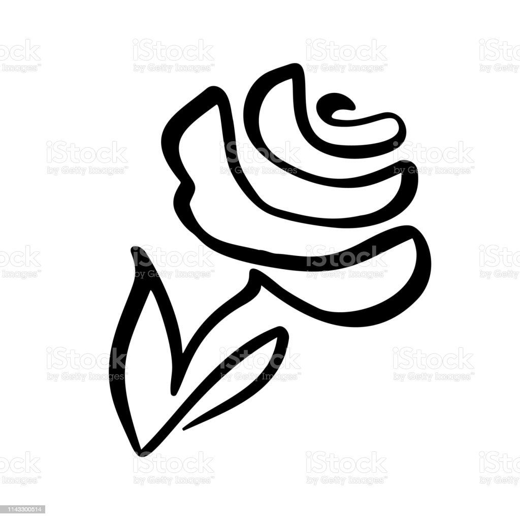 Rose Flower Concept Continuous Line Hand Drawing