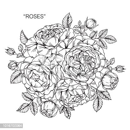 Rose fleur dessin illustration noir et blanc avec dessins au trait sur fond blanc vecteurs - Dessin de fleur en noir et blanc ...