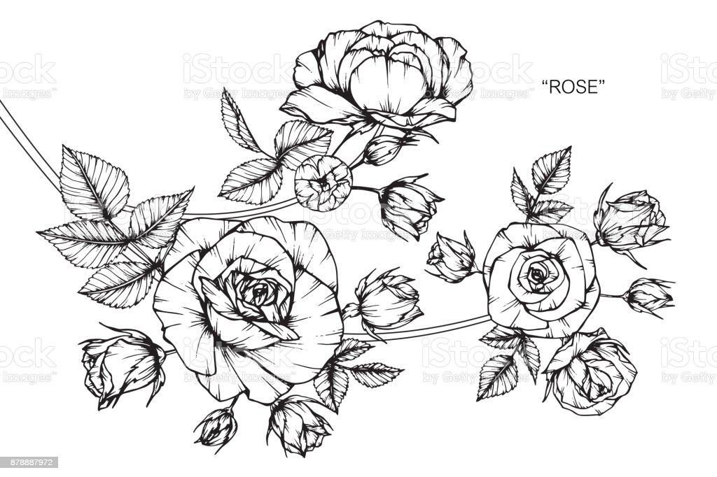 Dessin De Fleur De Rose Cliparts Vectoriels Et Plus D Images De