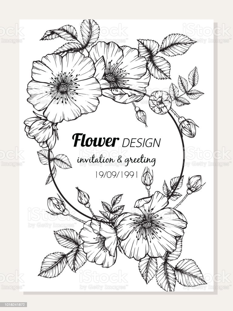 Rose Flower Frame Drawing Illustration For Invitation And