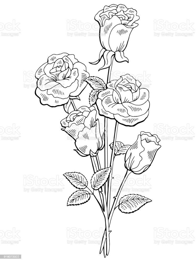 バラの花グラフィック黒白い分離花束スケッチ イラスト いたずら書きの