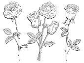 Rose flower graphic black white isolated sketch illustration vector
