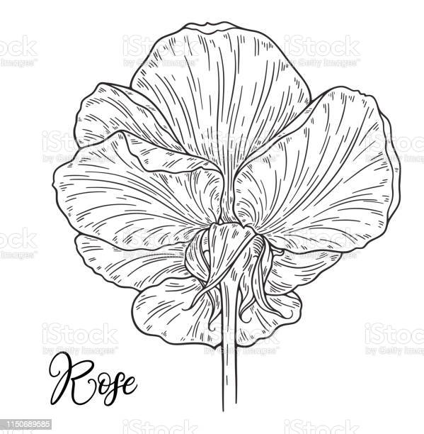 Rose flower hand drawn in lines black and white monochrome graphic vector id1150689585?b=1&k=6&m=1150689585&s=612x612&h=hsfj19ddgmlcatw7hbnozep4lxfvupl6q5to0vphnp8=