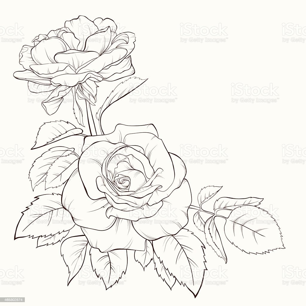 rose flower handdrawn contour lines and strokes element for design F30 M Sport rose flower hand drawn contour lines and strokes element for design royalty