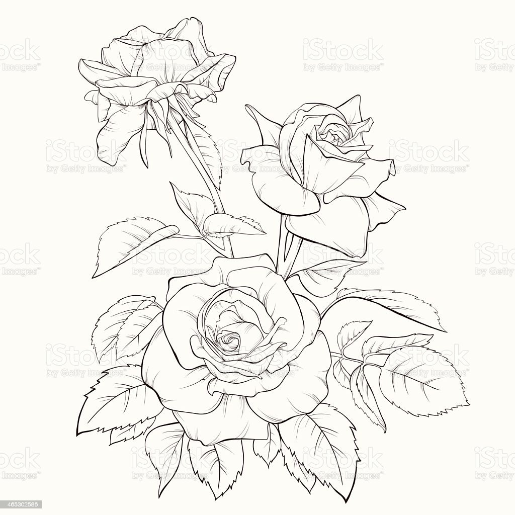 Contour Line Drawing Of A Flower : Rose flower handdrawn contour lines and strokes element