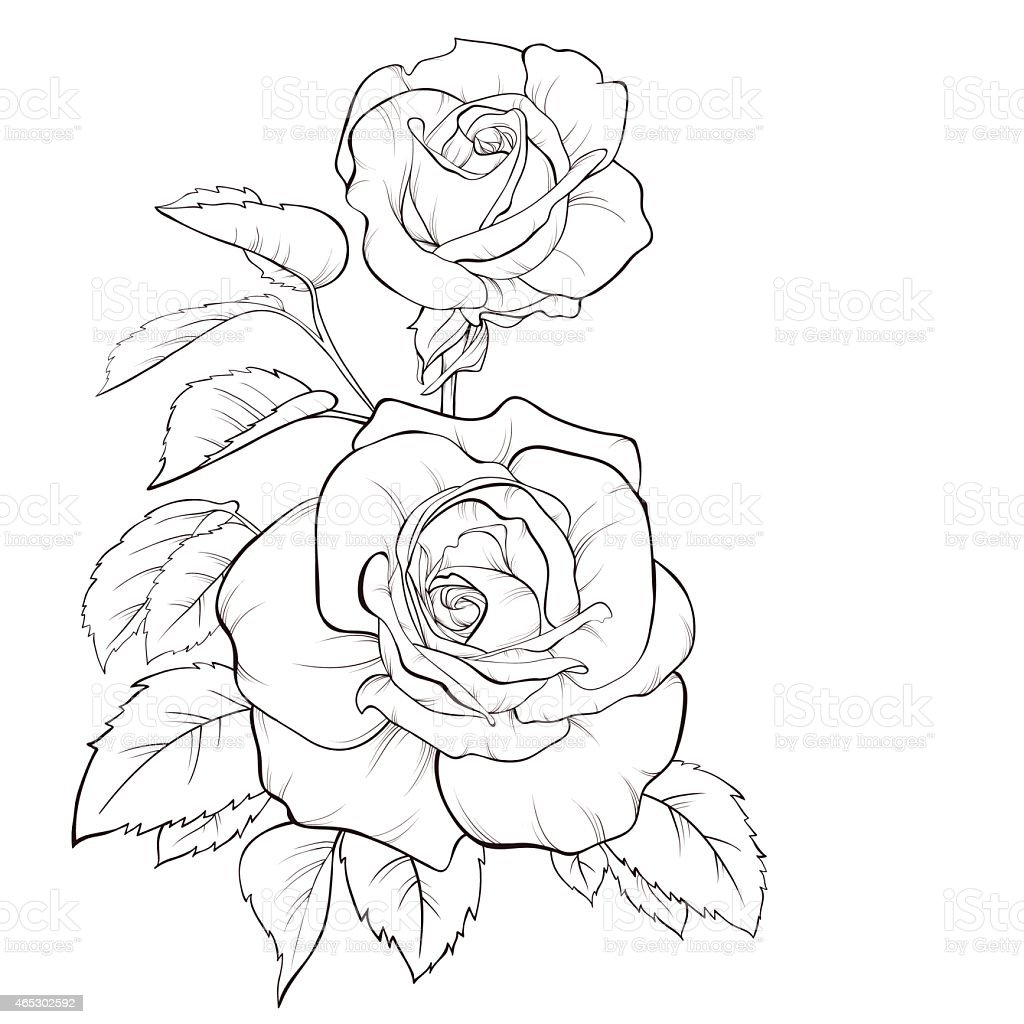 Line Drawing Rose Flower : Rose flower handdrawn contour lines and strokes element