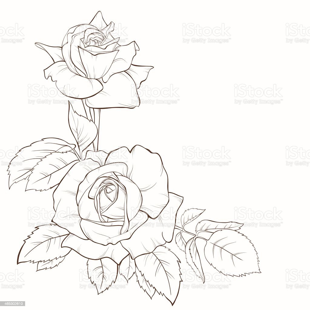 Line Drawing Of Rose Flower : Rose flower handdrawn contour lines and strokes element