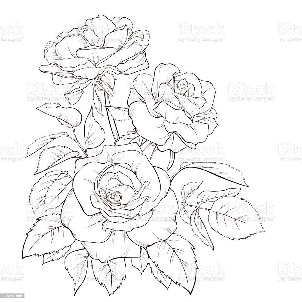 Flower Line Art Images: Rose Flower Handdrawn Contour Lines And Strokes Element