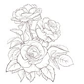 Rose flower. Hand-drawn contour lines and strokes. Element for design.