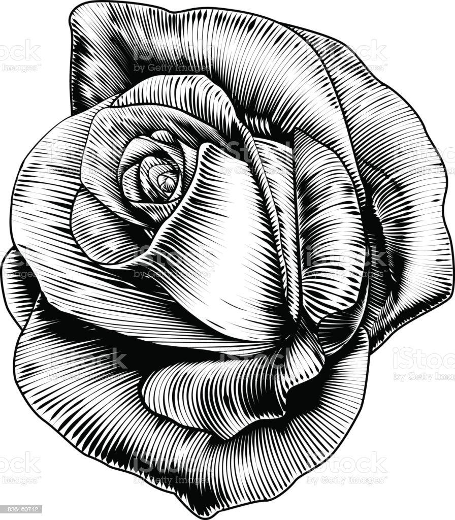 Flor rosa en el estilo de grabado en madera grabado aguafuerte - ilustración de arte vectorial