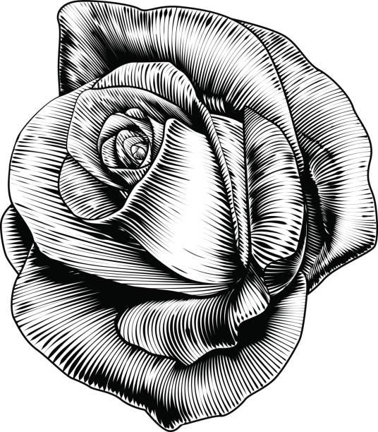 illustrations, cliparts, dessins animés et icônes de fleur rose en style gravure eau-forte gravée - tatouages de fleurs