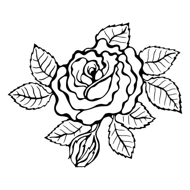 best rose tattoo stencil drawings illustrations royalty