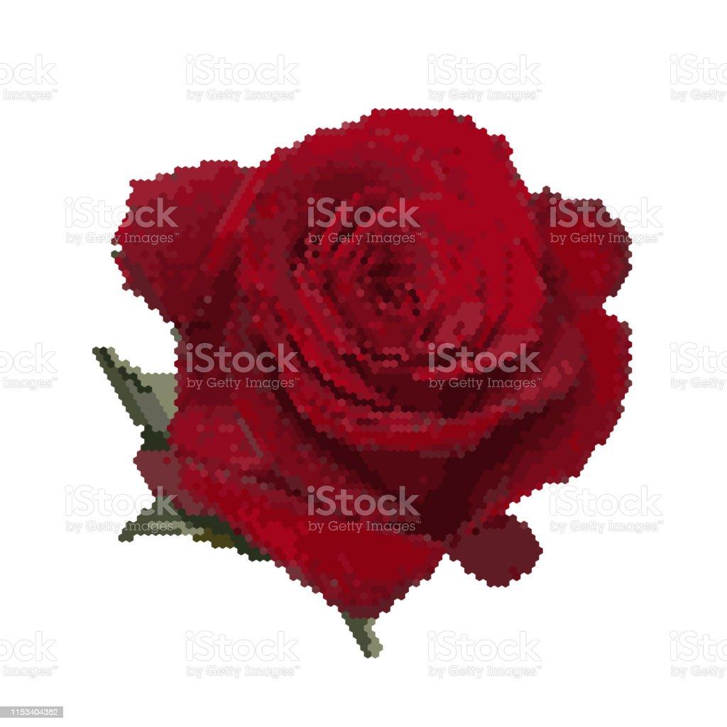 Fleur De Rose Isolé Sur Le Blanc Illustration Vectorielle