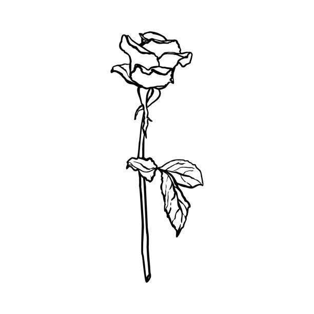 Simple Rose Tattoo Clip Art Illustrations Royalty Free Vector