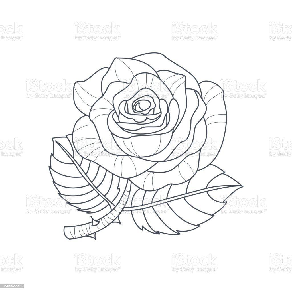 Rosa Flor Monocromo Dibujo Para Libro De Colorear - Arte vectorial ...