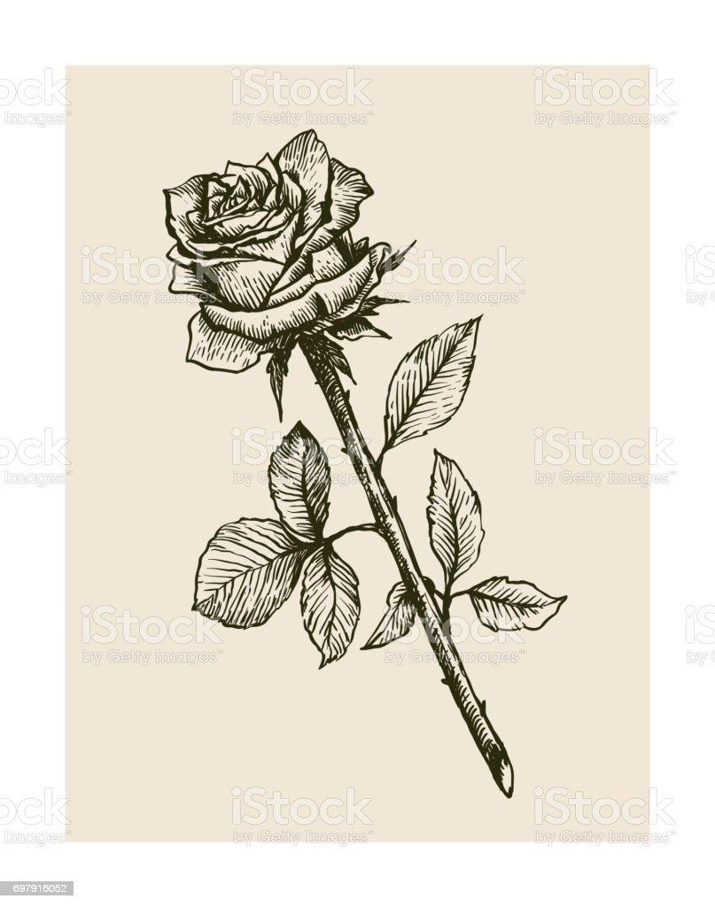 ilustração de desenho de flor rosa e mais banco de imagens de
