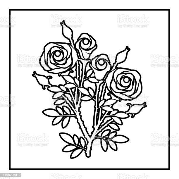 Rose flower vector id1198795312?b=1&k=6&m=1198795312&s=612x612&h=nj2hrmzznre45uxym57qlxpkjijyy8x8vjoam446bdq=
