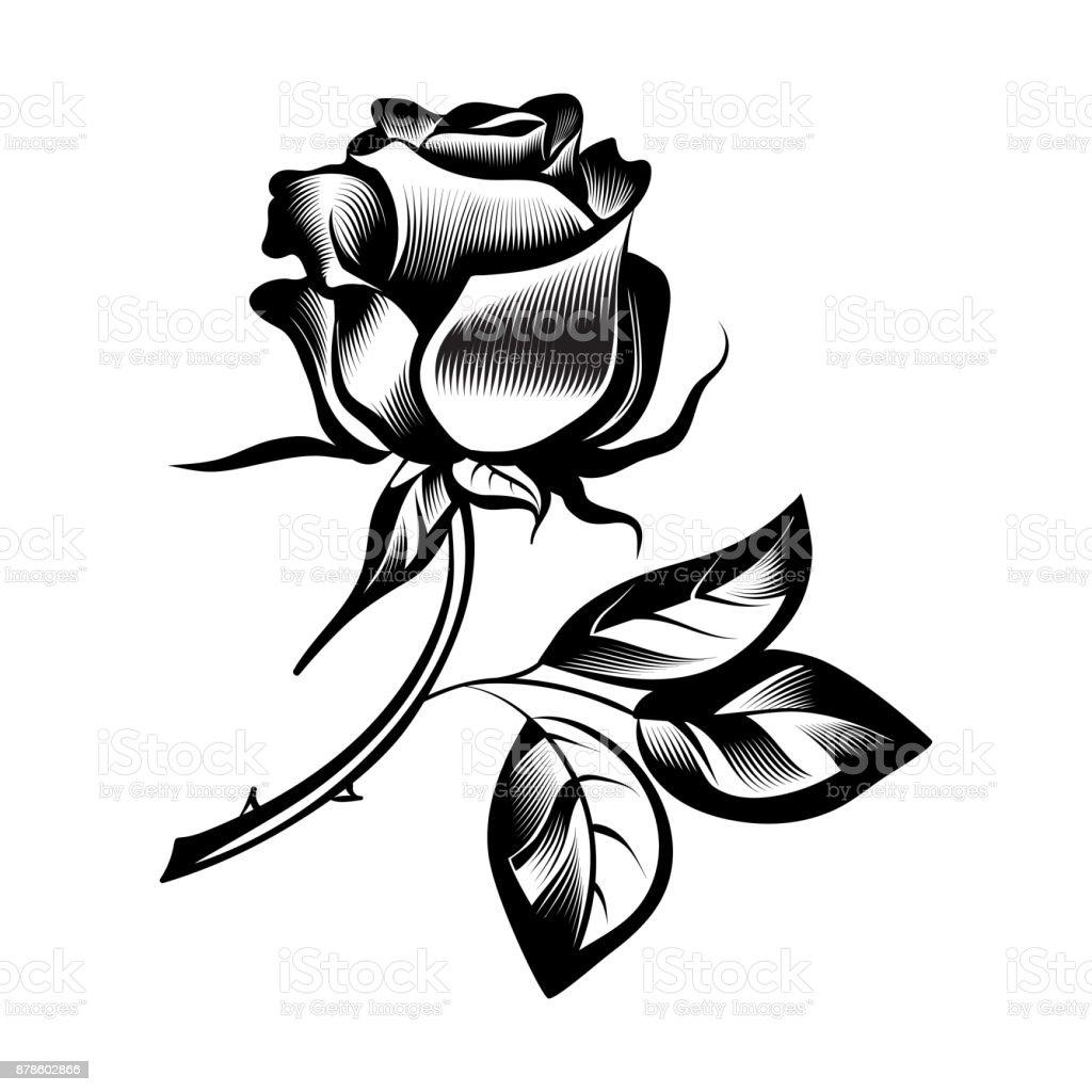 Flor de rosa  - ilustração de arte em vetor