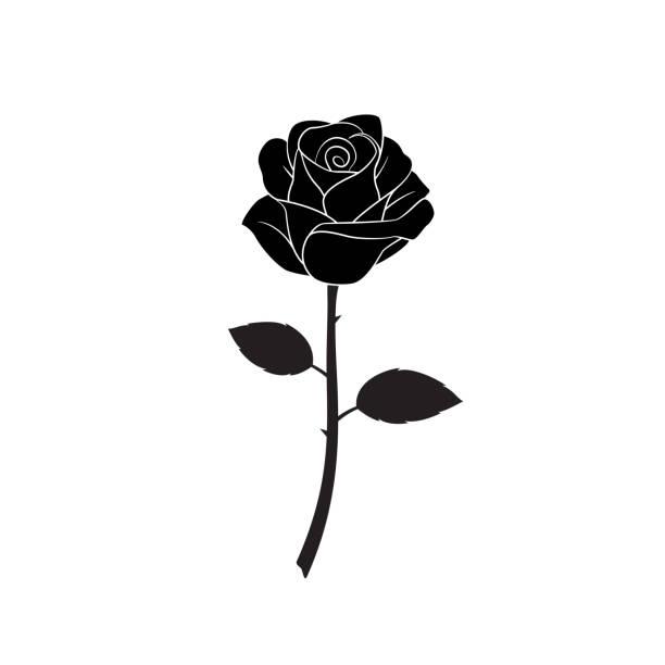 Rose flower Silhouette of flower roses on white background. Isolated Vector Illustration. plant stem stock illustrations