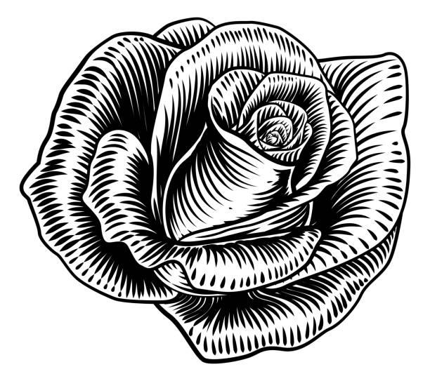Black Roses PNG Images, Free Transparent Black Roses Download - KindPNG