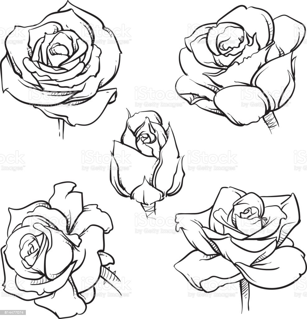 Simple Rose Tattoo Outline: Rose Flowers Outline Vector Set Hand Drawn Flower Isolated
