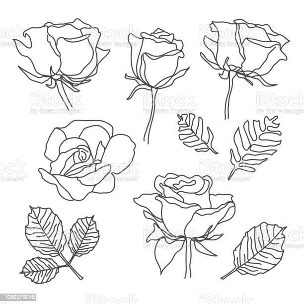 Rose flowers set in sketch line art style hand drawn black detailed vector id1089379248?b=1&k=6&m=1089379248&s=612x612&h=pjjl2zfg9iwcqltyts l eqbtnmomckvsuslov2uur0=