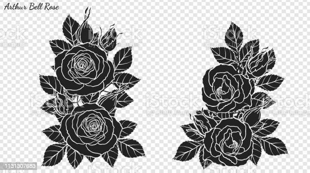 Rose ornament vector by hand drawing vector id1131307683?b=1&k=6&m=1131307683&s=612x612&h=ox3suaqrw8amwhdthsuhzeizza6avszzmsofomwylpe=