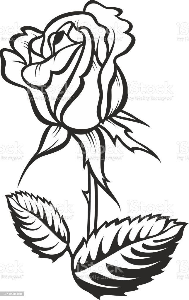 Ilustración De Rose Silueta De Tallo Engrosados Que Y Hojas Vector
