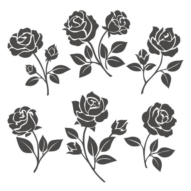 Rose silhouettes decorative set Rose silhouettes vector illustration. Black buds and stems of roses stencils isolated on white background sharp stock illustrations