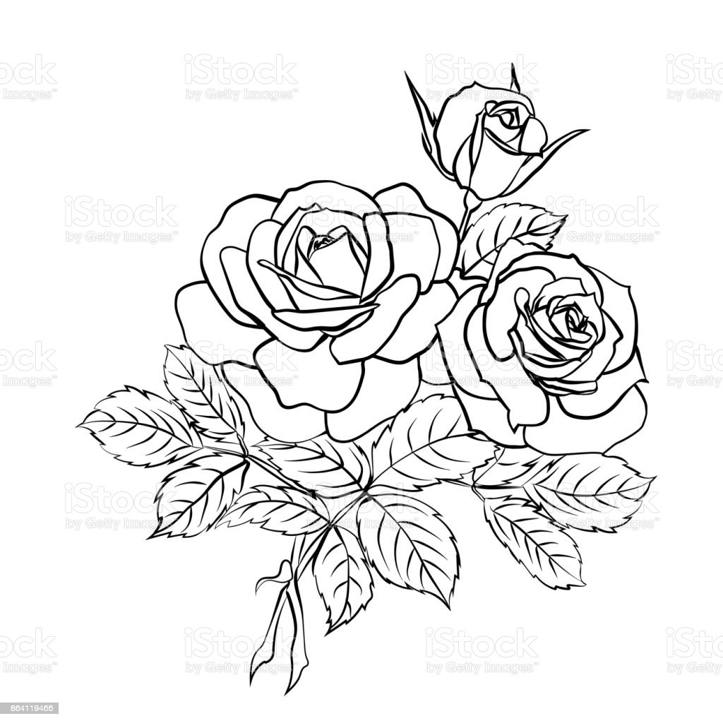 Rose sketch on white background royalty-free rose sketch on white background stock vector art & more images of abstract