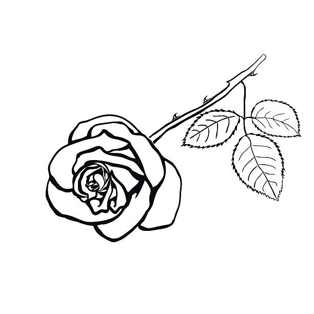 Royalty Free Clip Art Of A Rose With Stem Tattoo Clip Art Vector