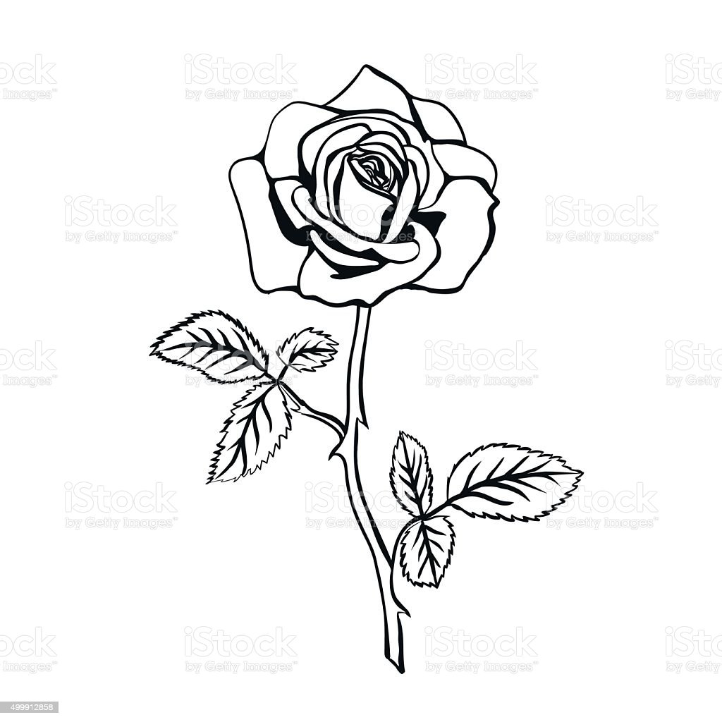 royalty free rose tattoo stencil designs pictures clip art vector rh istockphoto com rose tattoo stencil rose tattoo template