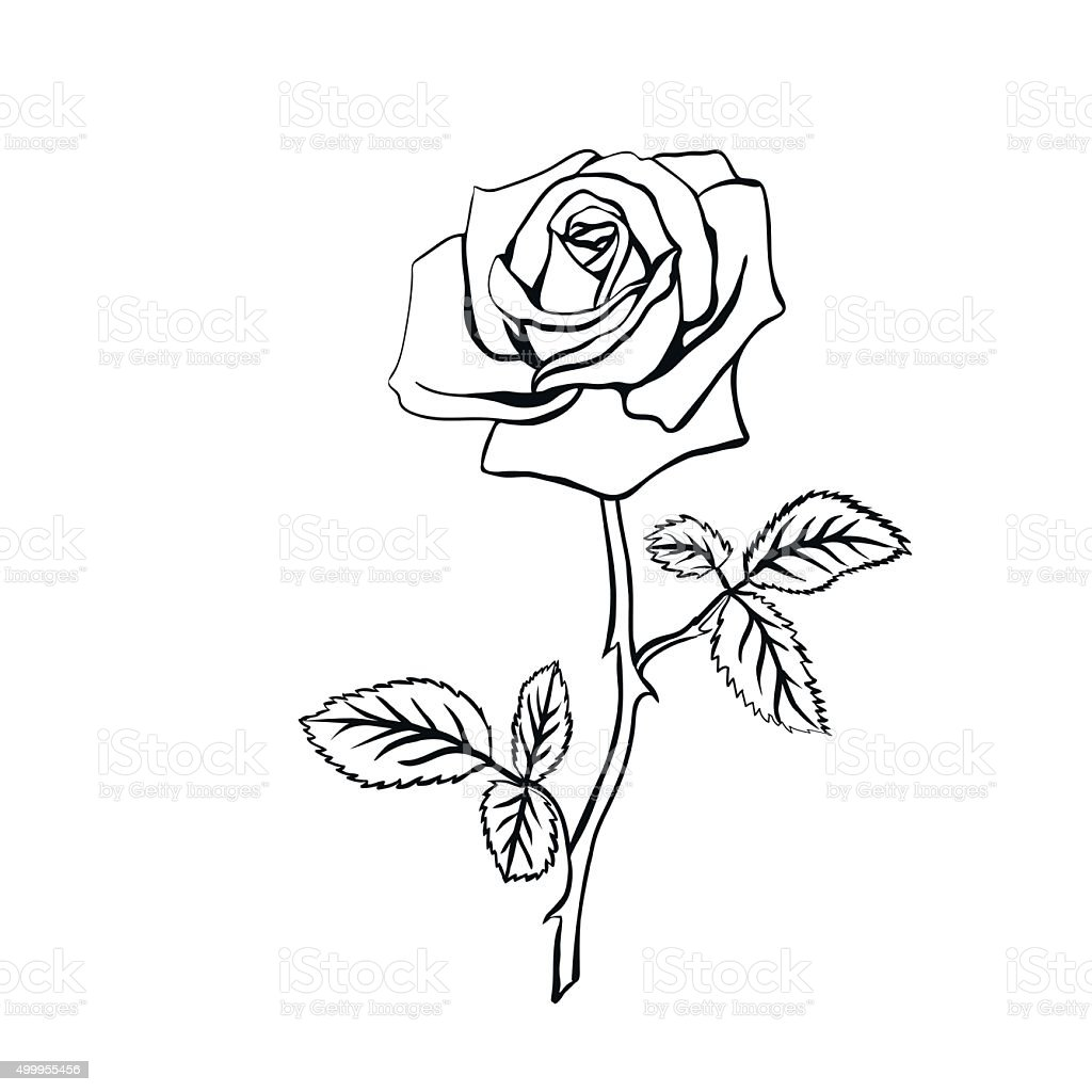 rose sketch stock vector art amp more images of abstract