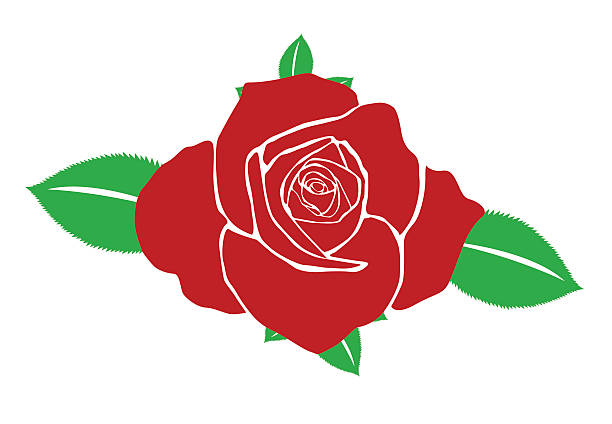 Single Rose Clipart: Best Single Rose Illustrations, Royalty-Free Vector